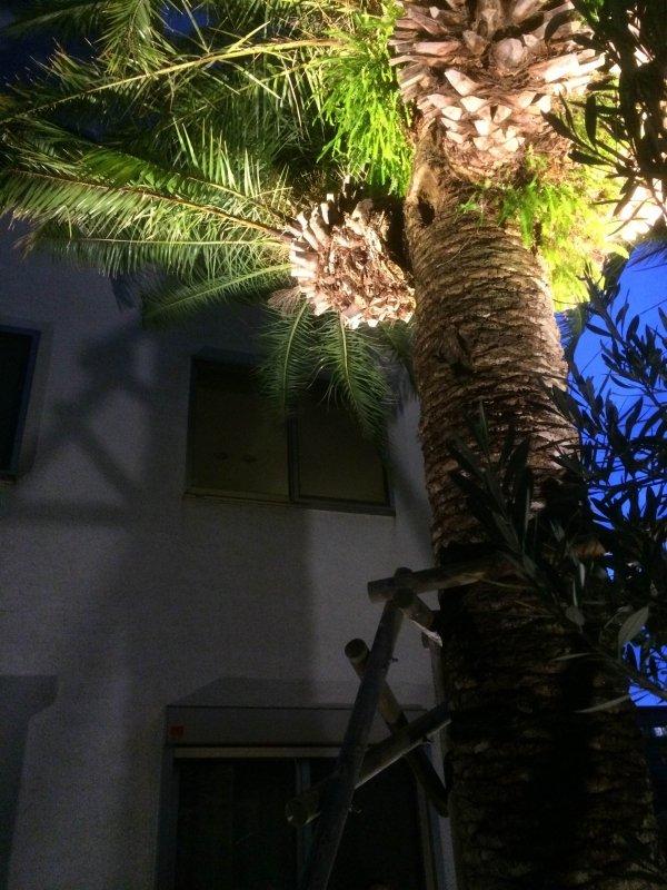 大きなヤシの木のライティング 株式会社風知蒼 神奈川県Y様邸 Spectacular garden lighting by lighting professionals. Enjoy a dramatic, romantic, even mysterious scene comparing to a day time.